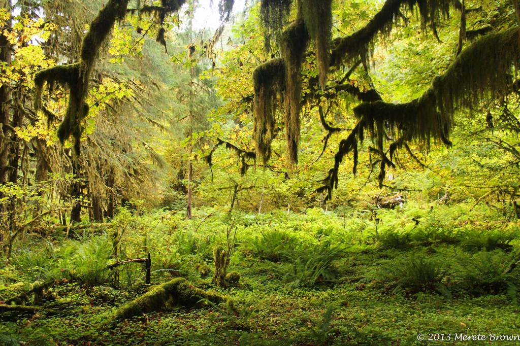 Park Beat XII – Olympic National Park (Part 2)
